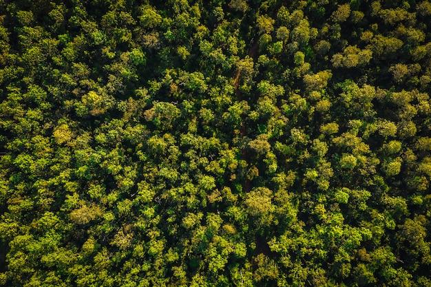 Draufsichtkiefernwald-utopiebereich in chiang mai thailand