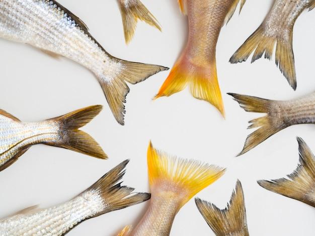 Draufsichtrahmen mit fischendstücken auf tabelle
