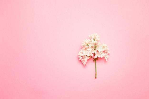 Draufsichtrahmen mit lila blume in den pastellfarben und im kopienraum auf einem rosa hintergrund