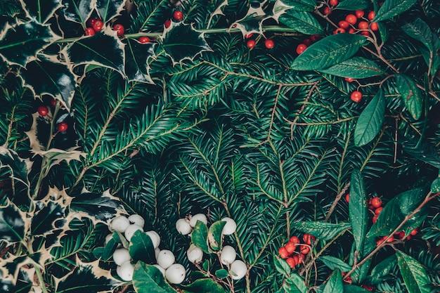 Draufsichtweihnachtshintergrund der wilden weihnachtsbaumzweige, heilige pflanze mit beeren, roten ebereschenbeeren und weißen schneebeeren, zentraler kopienraum mit einem schönen rahmen aus beeren und blättern