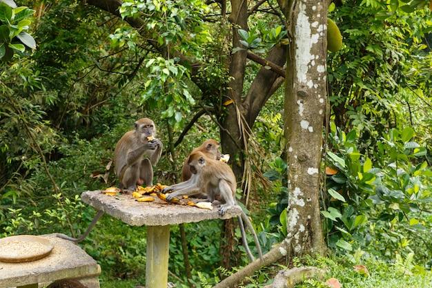 Drei affen essen bananen