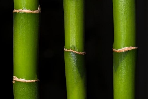 Drei bambus