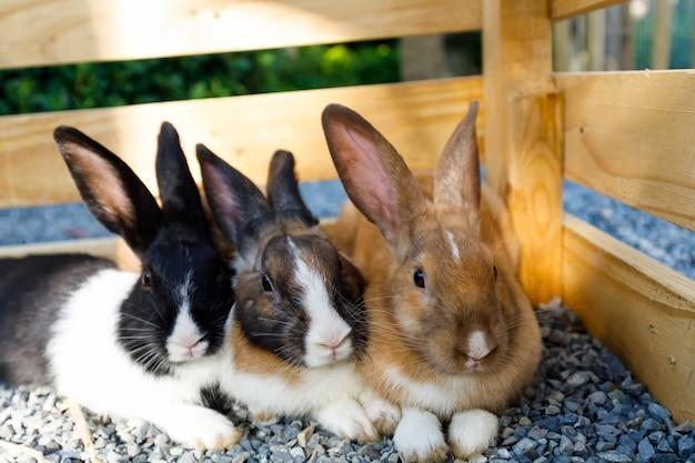 Drei-farbiges kaninchen in einer holzkiste nette haustiere