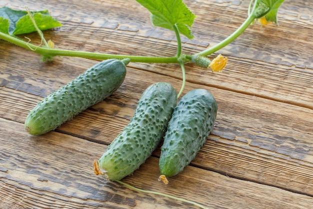 Drei frische gurken mit grünen blättern im garten auf alten holzbrettern gepflückt. frisches reifes gemüse. ansicht von oben.