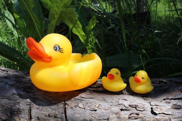 Drei gelbe gummienten zum schwimmen familie von gelben gummienten auf einer holzoberfläche