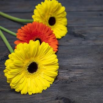 Drei gerbera sind gelb und orange auf einem dunklen holztisch. schöne blumen.