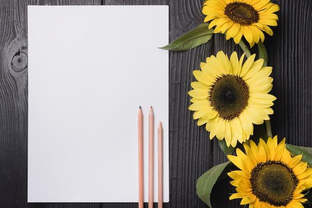 Drei hölzerne farbige bleistifte auf leerem papier mit gelben sonnenblumen auf hölzernem hintergrund