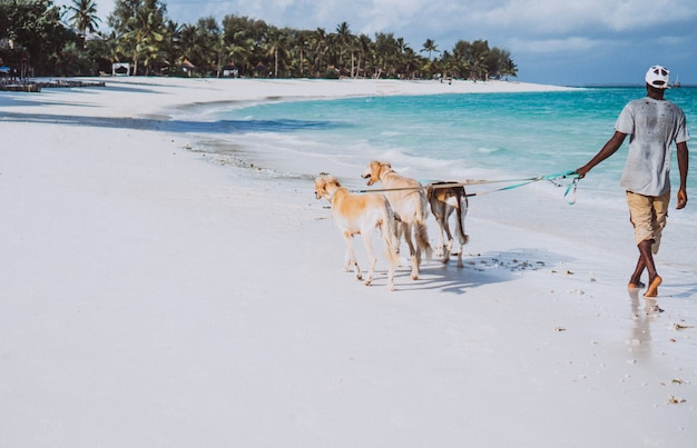 Drei hunde, die auf die küste eines indischen ozeans gehen