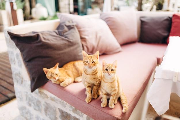 Drei ingwerkatzen auf einem rosa sofa mit bunten kissen