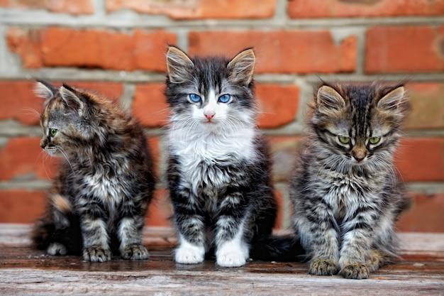 Drei kätzchen auf ziegelhintergrund