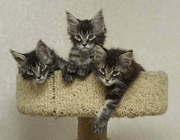 Drei kätzchen sitzen in einem spielkatzenkomplex, spielplatz
