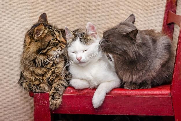 Drei katzen sitzen auf einem stuhl