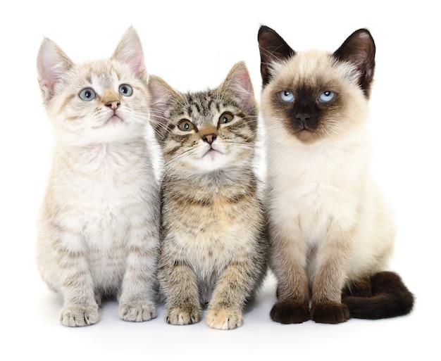 Drei kleine kätzchen auf weiß.