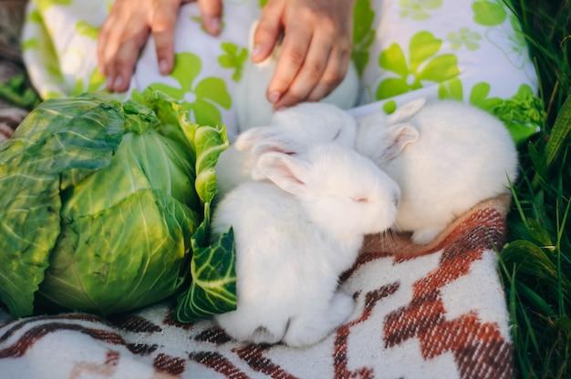 Drei kleine weiße kaninchen und ein großer grünkohl