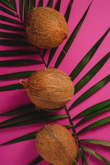 Drei kokosnussfrüchte mit palmblättern auf lebendigem rosa purpurrotem hintergrund, tropisches konzept, draufsicht