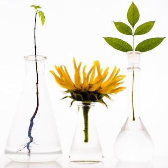 Drei laborkolben mit pflanzen auf weißem hintergrund