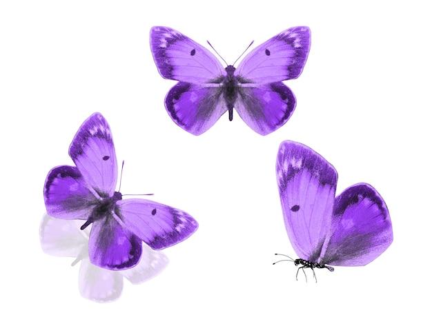 Drei lila schmetterlinge auf einem weißen hintergrund. foto in hoher qualität