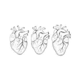 Drei menschliche herzen dotwork. raster-illustration des hippie-art-t-shirt-designs. tattoo hand gezeichnete skizze.
