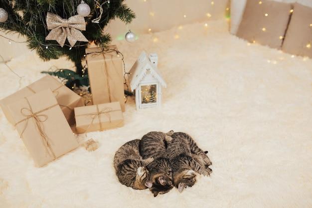 Drei niedliche kätzchen, die nahe weihnachtsbaum liegen.