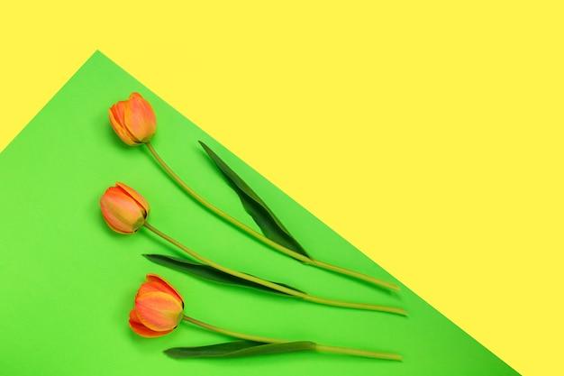 Drei orange tulpen auf kreativem farbpastell