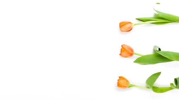 Drei orange tulpen auf weißem hintergrund