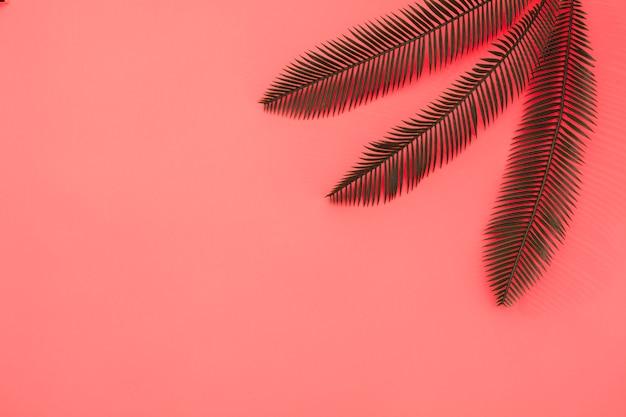 Drei palmblätter auf korallenrotem hintergrund