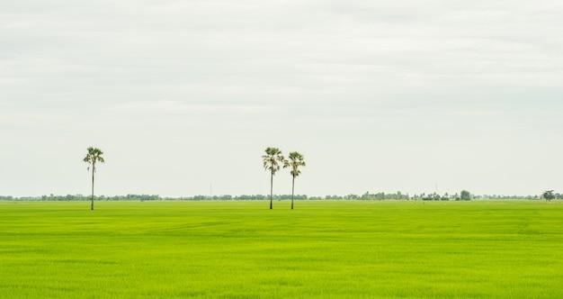 Drei palmen im grünen feld