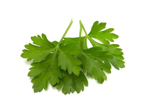 Drei petersilienblätter auf weißem hintergrund. isolierte grüns für eine schnelle auswahl.