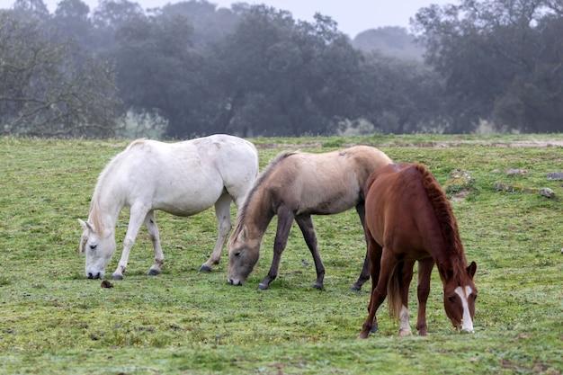 Drei pferde an einem nebligen tag