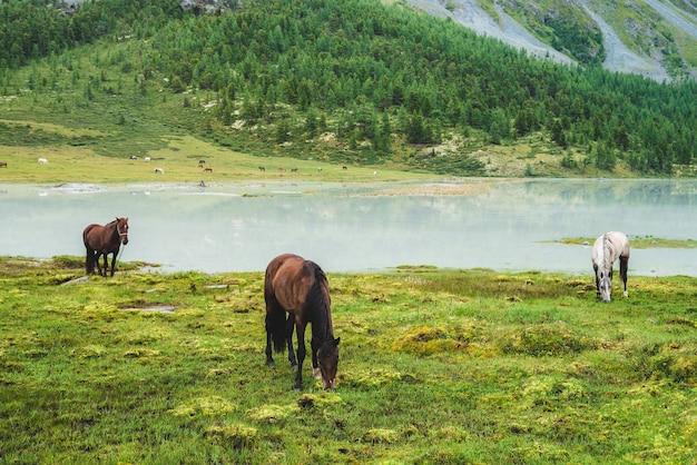 Drei pferde grasen auf der wiese in der nähe des flusses im gebirgstal. weiße und braune pferde auf grasland nahe bergsee. schöne landschaft mit grauen und braunen pferden. wald und herde am gegenüberliegenden ufer.