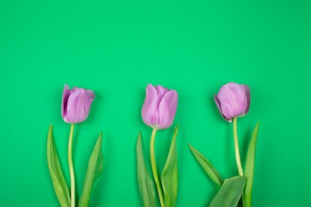 Drei purpurrote tulpen auf einem grünen hintergrund