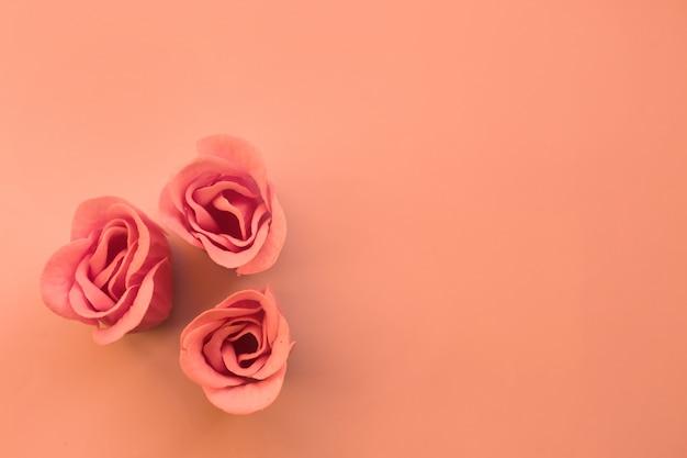 Drei rosa rosen auf korallenrotem hintergrund mit kopienraum
