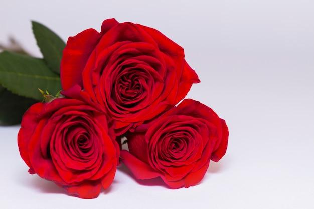 Drei rote rosen auf weißem hintergrund mit kopierraum.