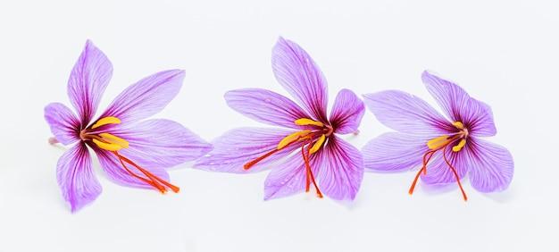 Drei safranblumen auf weißem hintergrund. safran.