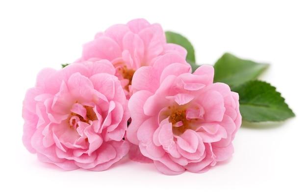Drei schöne rosa rosen auf einem weißen hintergrund.