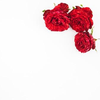 Drei schöne rote rosen auf weißem hintergrund