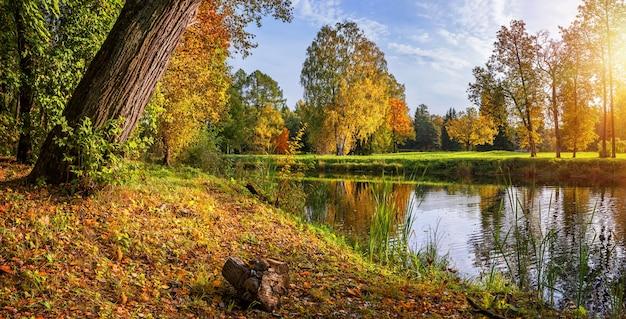 Drei schwestern birken im herbstpark am ufer des flusses in pavlovsk in st. petersburg