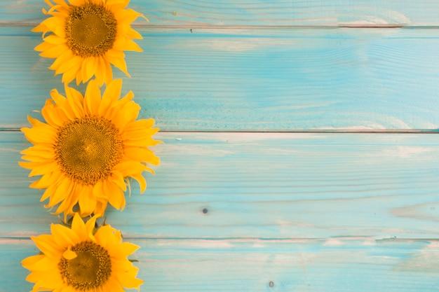 Drei sonnenblumen auf blauem hölzernem hintergrund