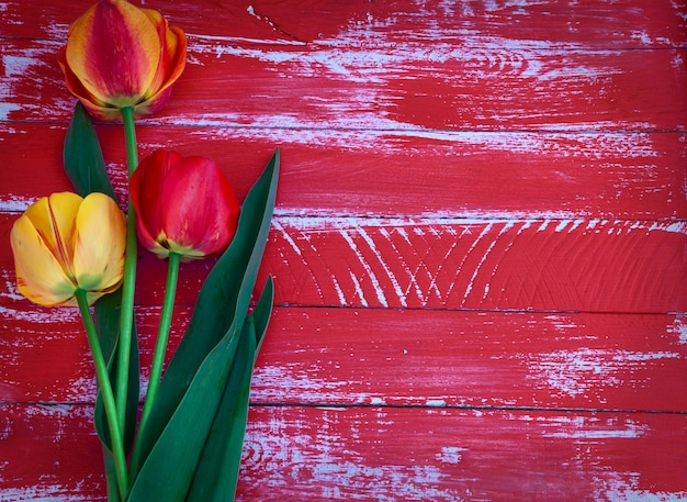 Drei tulpen auf einer roten holzoberfläche