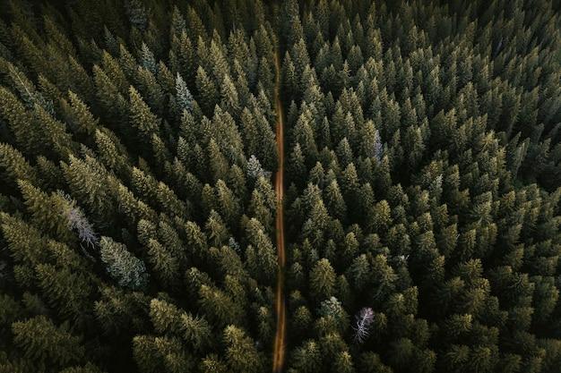 Drohnenansicht eines grünen waldes mit einer unbefestigten straße