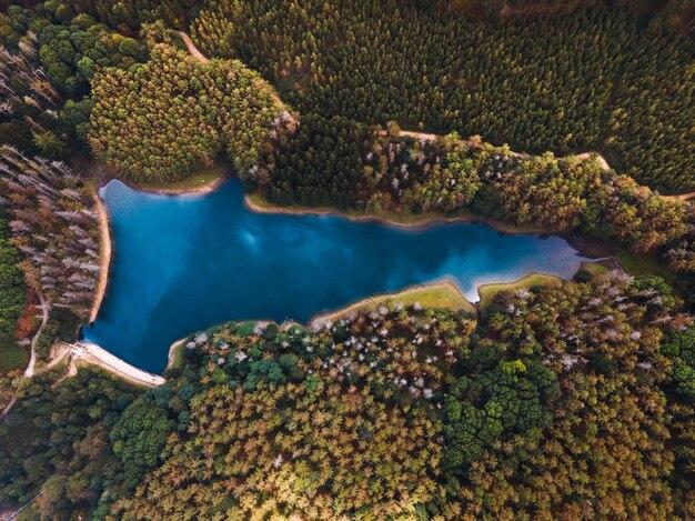 Drohnenansicht eines schönen herbstwaldes vom himmel