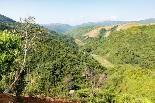 Dschungel am berghang, wunderschöne landschaft