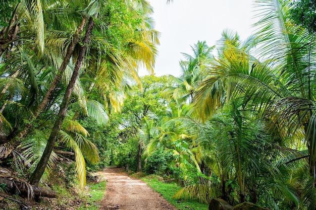 Dschungel, regenwald, wald. pfad im dschungel der teufelsinsel, französisches guinea. palmen mit grünen blättern. natur, umwelt, ökologie. fernweh, urlaub, reisen.