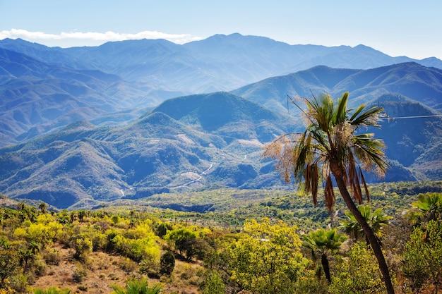 Dschungel und berge in der regenzeit in mexiko
