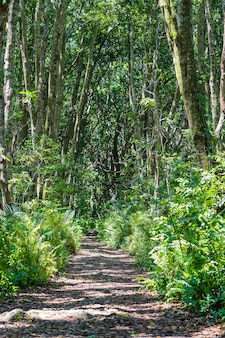 Dschungelwald mit wanderweg und wildtieren an einem klaren sonnigen tag auf der insel sansibar, tansania, ostafrika