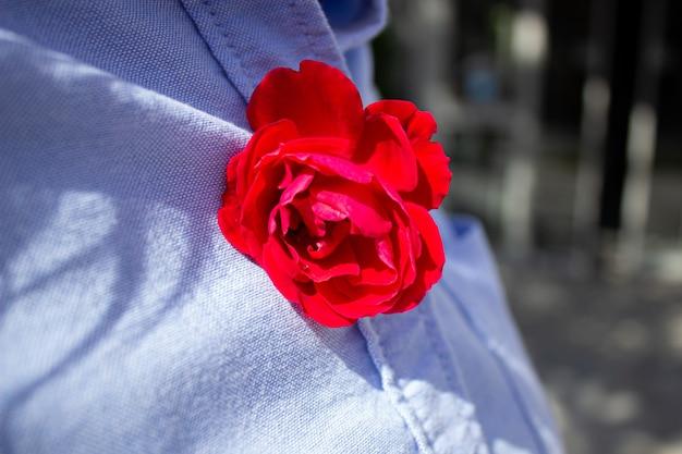 Du bist in meinem herzen - motivationsinspirationszitat der liebe. rote rose auf dem hintergrund des blauen jeanshemdes. stillleben mit rosenblüte. valentinstag grußkonzept.