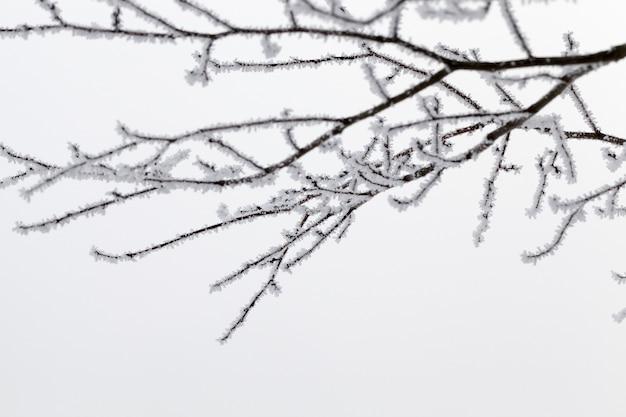 Dünne lange laubwaldzweige mit kahlen bäumen im winter, bedeckt mit schnee und frost