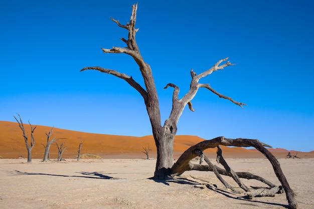 Dürre baum in der wüste