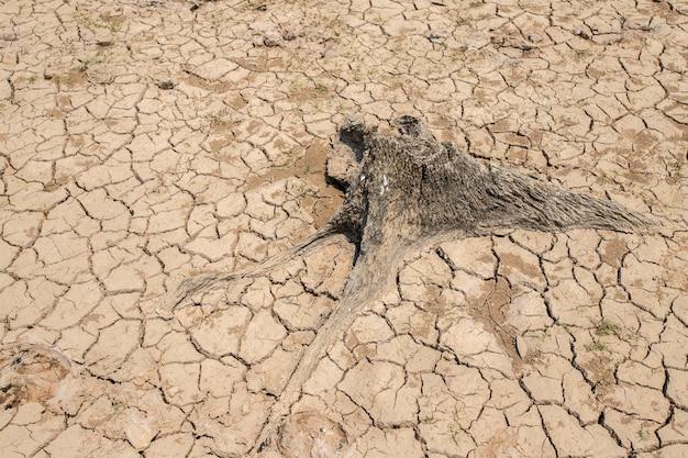 Dürre, klimawandel und dürreland