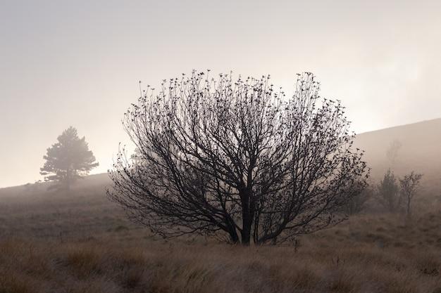 Düstere landschaft mit einem einzigen baum in istrien, kroatien